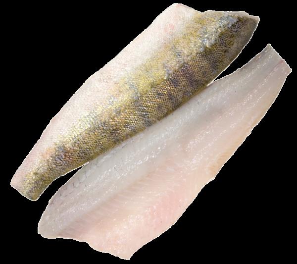 Zanderfilet ca. 600 g mit Haut